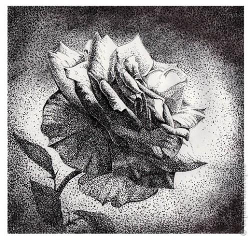 роза Бумага А3,тушь,перо