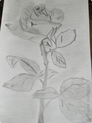 Цветок нарисованный карандашом .