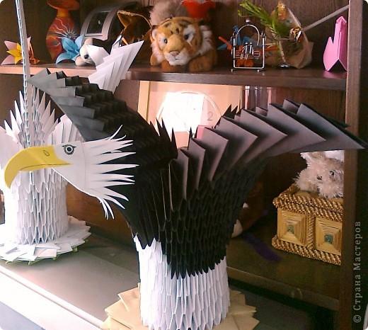 Белоголовый орел...,надеюсь что похож. фото 1