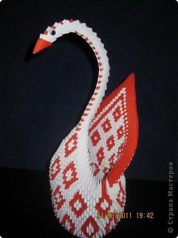 Лебедь с большим хвостом фото 1