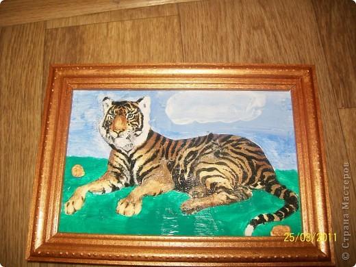 Мой тигр.