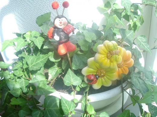 Начнем с цветочков,эти цветы -производство моей мамы ,,ЁЖИХИ,,  Давайте поиграем: я буду задовать загадки ,а ответы будут на фотографиях ниже,.в коментариях вы пишить  цифру фото и ответ.  И так начнем: 1.Хоть не зверь я и не птица, Но сумею защититься! Растопырю коготки - Только тронь мои цветки! фото 6
