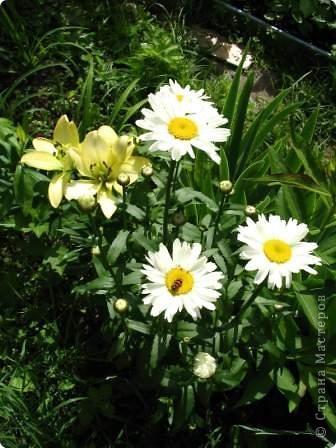 Начнем с цветочков,эти цветы -производство моей мамы ,,ЁЖИХИ,,  Давайте поиграем: я буду задовать загадки ,а ответы будут на фотографиях ниже,.в коментариях вы пишить  цифру фото и ответ.  И так начнем: 1.Хоть не зверь я и не птица, Но сумею защититься! Растопырю коготки - Только тронь мои цветки! фото 5