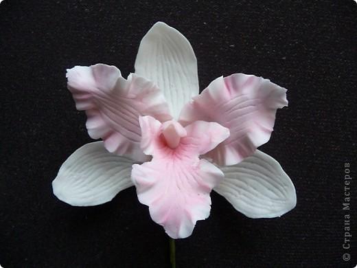 Стыдно показывать свои орхидеи-гигантусы))) Кажется я слишком большие каттеры сделала.  фото 1