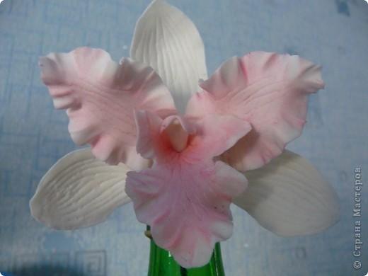 Стыдно показывать свои орхидеи-гигантусы))) Кажется я слишком большие каттеры сделала.  фото 4
