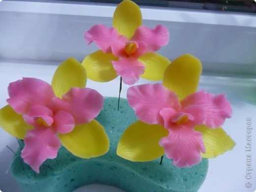 Стыдно показывать свои орхидеи-гигантусы))) Кажется я слишком большие каттеры сделала.  фото 2