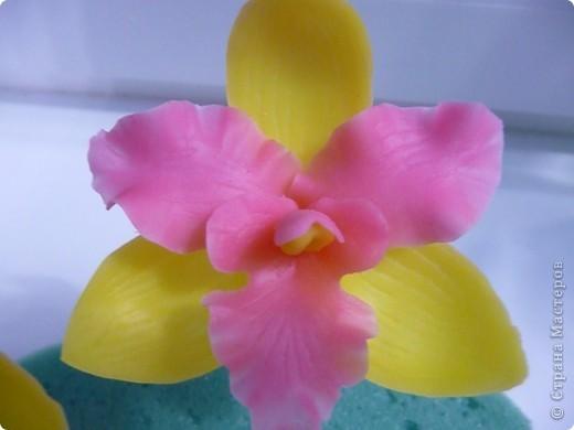 Стыдно показывать свои орхидеи-гигантусы))) Кажется я слишком большие каттеры сделала.  фото 3