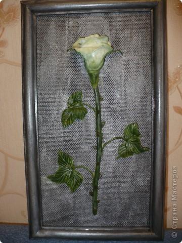 Очень захотела одну белую розу и на чёрном фоне. Т.к. чёрный фон смотрелся очень вызывающе, я его немного посеребрила.  фото 1