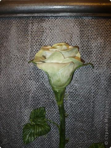 Очень захотела одну белую розу и на чёрном фоне. Т.к. чёрный фон смотрелся очень вызывающе, я его немного посеребрила.  фото 3