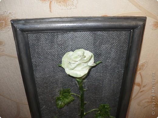 Очень захотела одну белую розу и на чёрном фоне. Т.к. чёрный фон смотрелся очень вызывающе, я его немного посеребрила.  фото 2