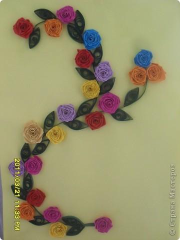 просто красивые розы! мне очень нравится. Я научилась делать розы не сразу месяца два спустя, вроде получается, для самоучки конечно это сложновато... фото 1