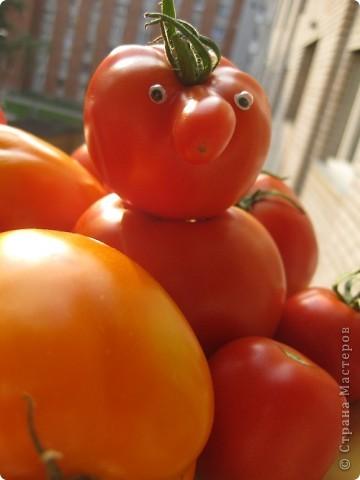 Эти помидоры выросли у нас на огороде, фотографировал еще осенью фото 1