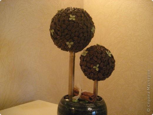 мое первое кофейное деревце фото 1