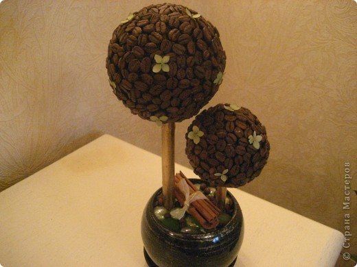 мое первое кофейное деревце фото 2