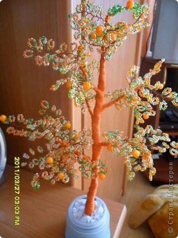 мое мандариновое дерево фото 1