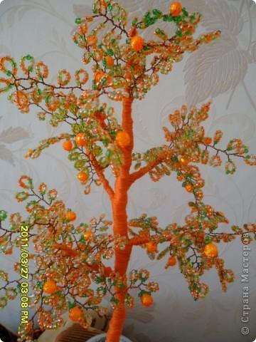 мое мандариновое дерево фото 2