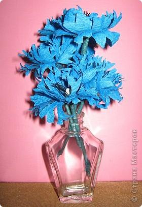 Синенькие цветочки фото 1