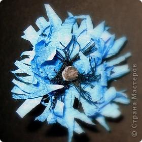 Синенькие цветочки фото 2