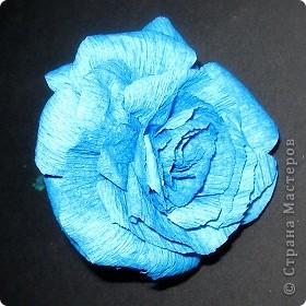 Синенькие цветочки фото 3