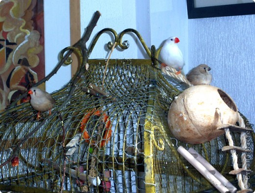 Уже знакомые Вам волнистые попугайчики http://stranamasterov.ru/node/170567 и те воробьинообразные, с кем Вы сейчас познакомитесь, живут на  этой веранде совершенно свободными.  Воробей мой, воробьишка!  Серый, юркий, словно мышка.  Глазки — бисер, лапки — врозь,  Лапки — боком, лапки — вкось...  Прыгай, прыгай, я не трону —  Видишь, хлебца накрошил...  Двинь-ка клювом в бок ворону,  Кто ее сюда просил?  Прыгни ближе, ну-ка, ну-ка,  Так, вот так, еще чуть-чуть...  Ветер сыплет снегом, злюка,  И на спинку, и на грудь.  Подружись со мной, пичужка,  Будем вместе в доме жить,  Сядем рядышком под вьюшкой,  Будем азбуку учить...  Ближе, ну еще немножко...  Фурх! Удрал... Какой нахал!  Съел все зерна, съел все крошки  И спасиба не сказал.  (1921) Саша Чёрный  фото 14