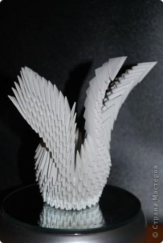 Мини-лебедь фото 1