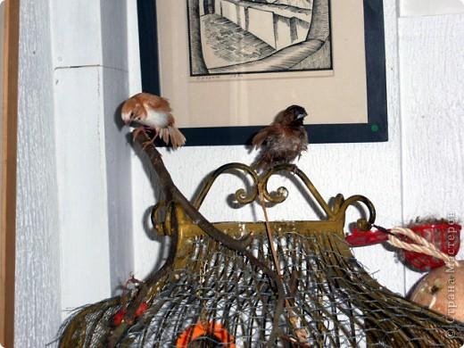 Уже знакомые Вам волнистые попугайчики http://stranamasterov.ru/node/170567 и те воробьинообразные, с кем Вы сейчас познакомитесь, живут на  этой веранде совершенно свободными.  Воробей мой, воробьишка!  Серый, юркий, словно мышка.  Глазки — бисер, лапки — врозь,  Лапки — боком, лапки — вкось...  Прыгай, прыгай, я не трону —  Видишь, хлебца накрошил...  Двинь-ка клювом в бок ворону,  Кто ее сюда просил?  Прыгни ближе, ну-ка, ну-ка,  Так, вот так, еще чуть-чуть...  Ветер сыплет снегом, злюка,  И на спинку, и на грудь.  Подружись со мной, пичужка,  Будем вместе в доме жить,  Сядем рядышком под вьюшкой,  Будем азбуку учить...  Ближе, ну еще немножко...  Фурх! Удрал... Какой нахал!  Съел все зерна, съел все крошки  И спасиба не сказал.  (1921) Саша Чёрный  фото 20