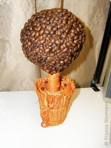 Кофейное дерево в подарок.