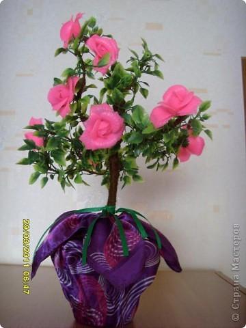 розовое дерево( или куст) фото 1