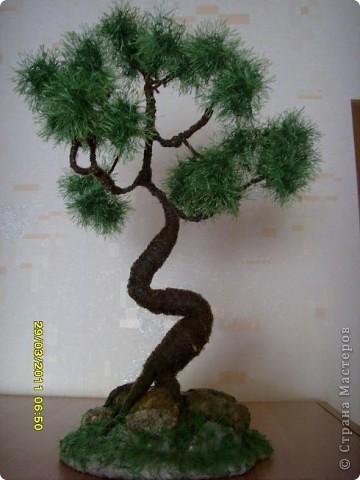 розовое дерево( или куст) фото 2