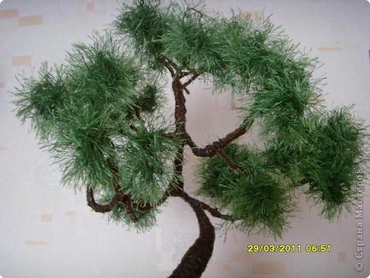 розовое дерево( или куст) фото 3