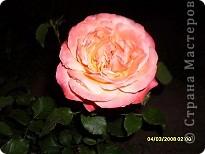 Цветочки в моем садочке фото 6