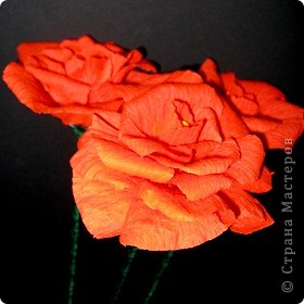 Алые розы фото 3
