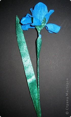 Синенькие цветочки фото 4