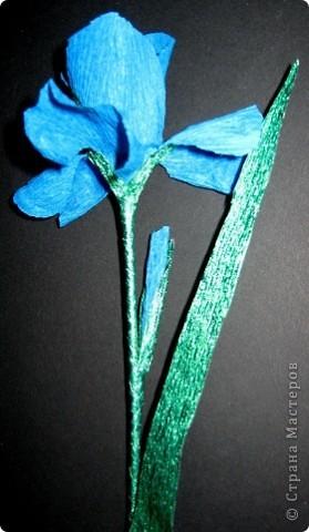 Синенькие цветочки фото 5