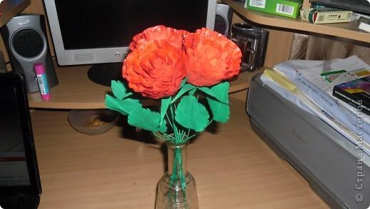 Выставляю на суд свои розы фото 1