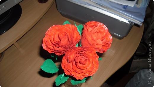 Выставляю на суд свои розы фото 2