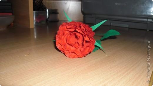 Выставляю на суд свои розы фото 4