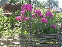 Цветочки в моем садочке фото 3
