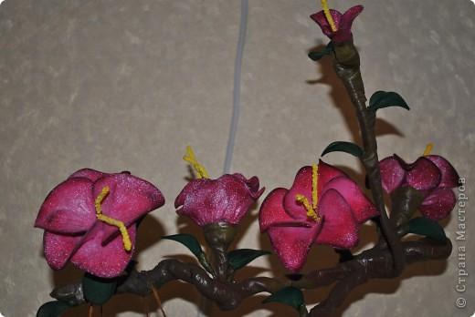 Помните МК цветов из капрона? А вот и продолжение. Цветы собрала в один цветок и на нём вдруг поселилась бабочка. Сделала по мативам pawy. Спасибо за Ваши идеи, Елена. фото 5