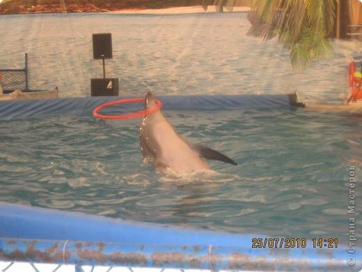 дельфинчик на котором я хотела покататься ,но к моему сожалению я болела, и мне не разрешили покататься на нем! фото 3