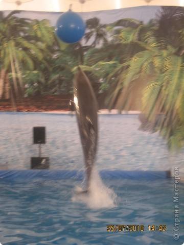 дельфинчик на котором я хотела покататься ,но к моему сожалению я болела, и мне не разрешили покататься на нем! фото 4