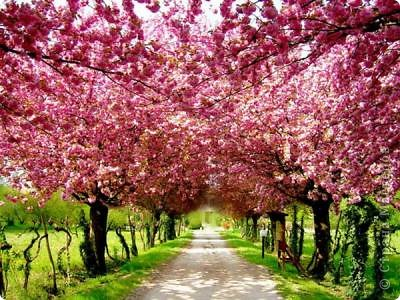 """Фото-панно """"Сакура цветет!Пришло весны очарование!"""" ...""""Печальна ли та Что восходящему солнцу во след Под сакурой нежно мечтает""""... Сакура (это вид вишни) прекрасна, многообразна и очень почитаема в Японии. Сделала небольшой МК (впервые) по изготовлению цветочков сакуры.Прошу прощения, если что не так. фото 20"""
