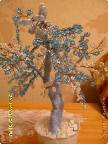 вот оно какое бело-голубое мое деревце. фото 1