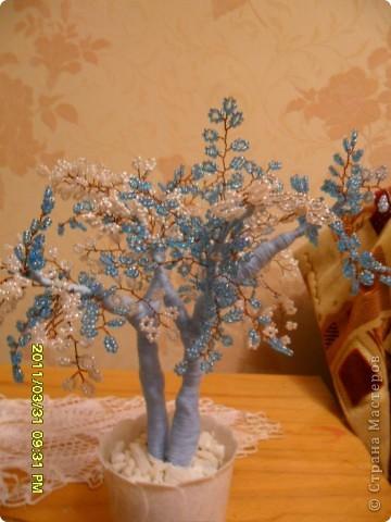 вот оно какое бело-голубое мое деревце. фото 2