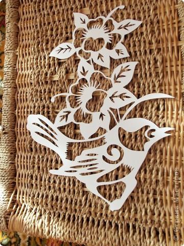 1 апреля-Всемирный День защиты птиц фото 9