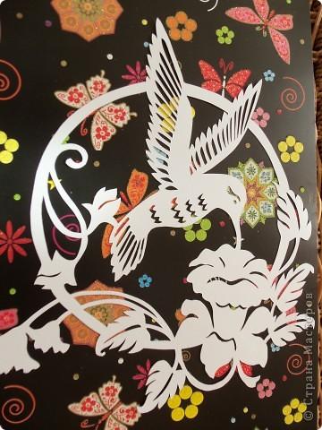 1 апреля-Всемирный День защиты птиц фото 1