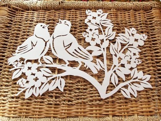 1 апреля-Всемирный День защиты птиц фото 16