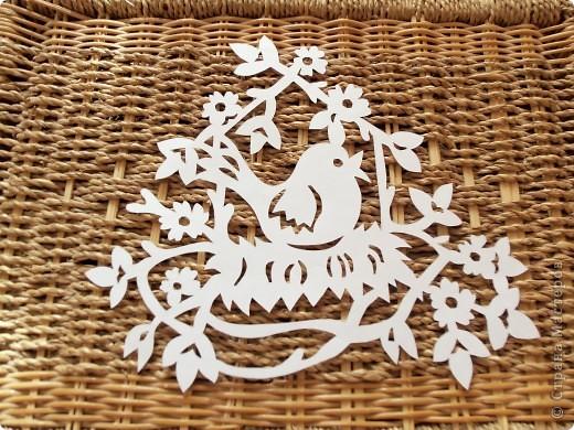 1 апреля-Всемирный День защиты птиц фото 5