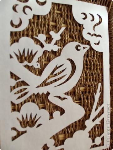 1 апреля-Всемирный День защиты птиц фото 2