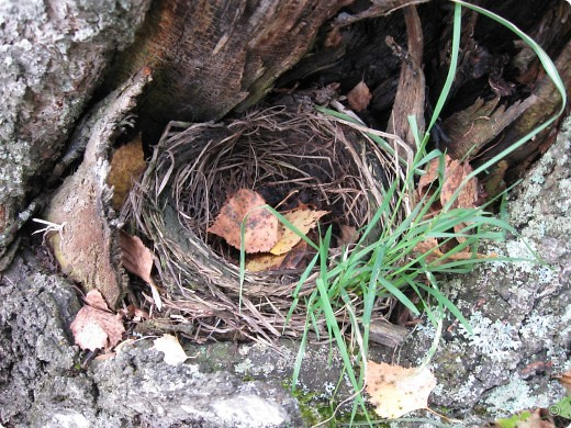 """Понимаю, что на дворе весна, а я тут с осенними зарисовками. Просто выложу снимки параллельно предыдущему, летнему фоторепортажу """" Прогулка по лесу"""". Т е. Примерно те же места, только сфотографированы осенью.  фото 9"""